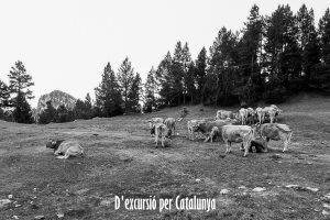 Cavalls del Vent - Etapa 01