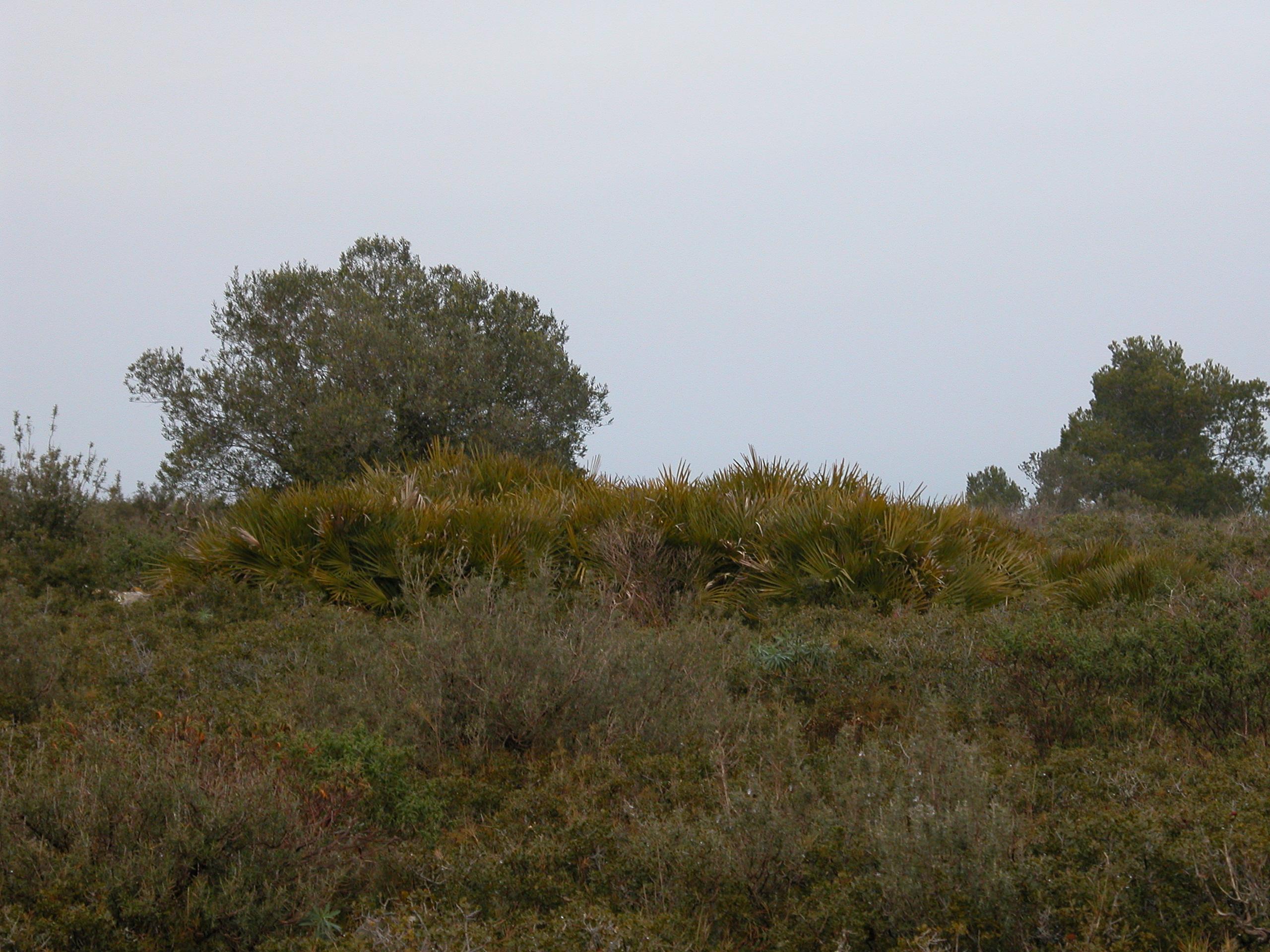 Margalló del Puig de la Palma
